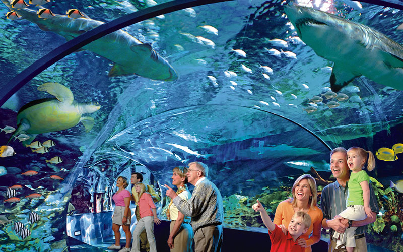 Ripley S Aquarium Of The Smokies Gatlinburg Things To Do